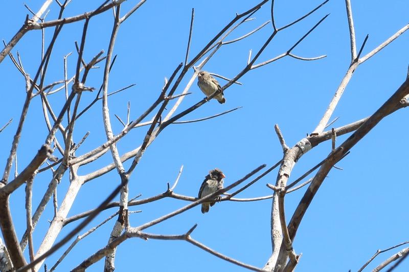 Urbina Bay birds