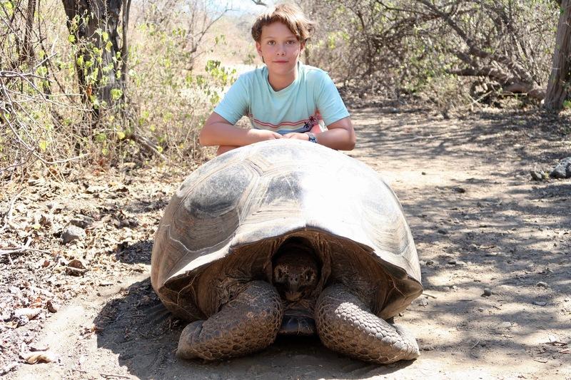 Isabela Island giant tortoise
